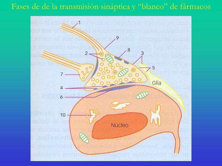 """Fases de de la transmisión sináptica y """"blanco"""" de fármacos"""