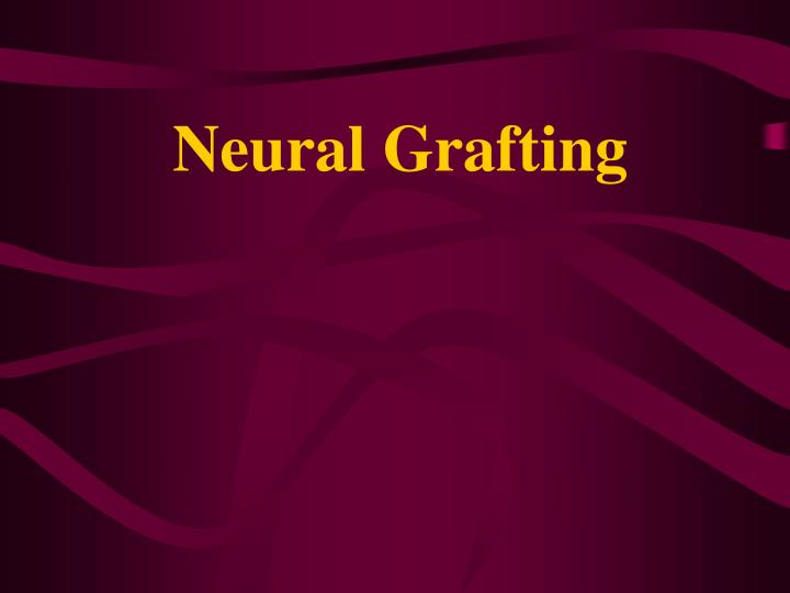 Neural Grafting