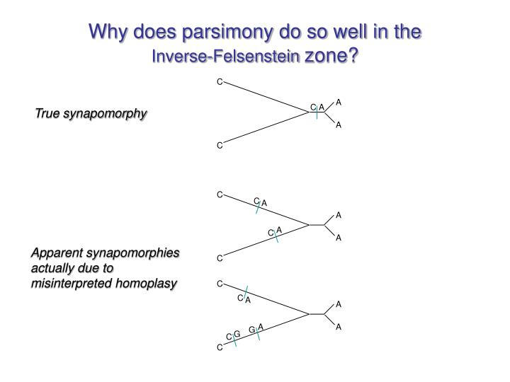 Why does parsimony do so well in the