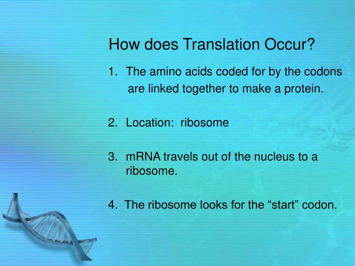 How does Translation Occur?