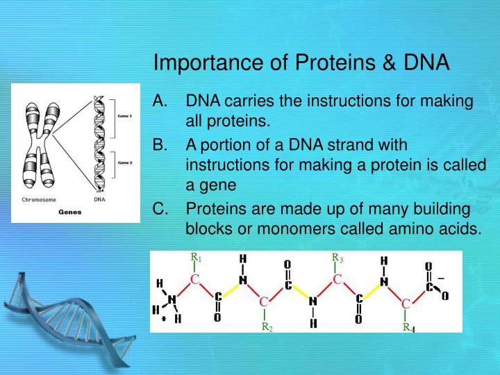Importance of proteins dna