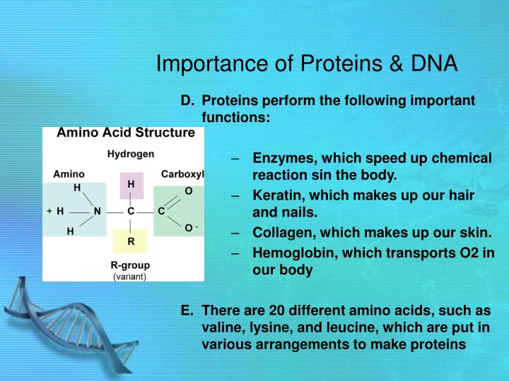 Importance of proteins dna1