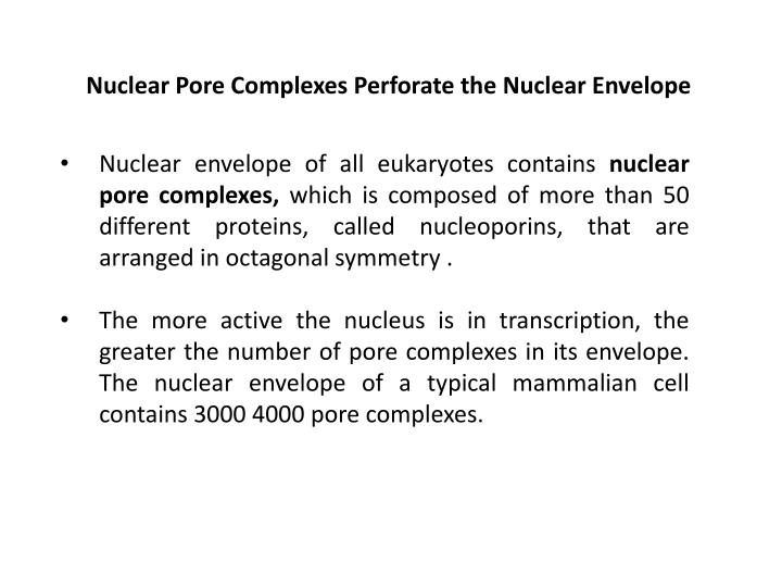 Nuclear Pore Complexes Perforate the Nuclear Envelope