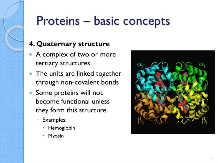 4. Quaternary structure
