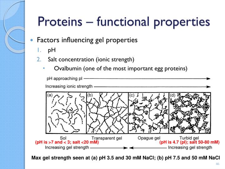 Proteins – functional properties