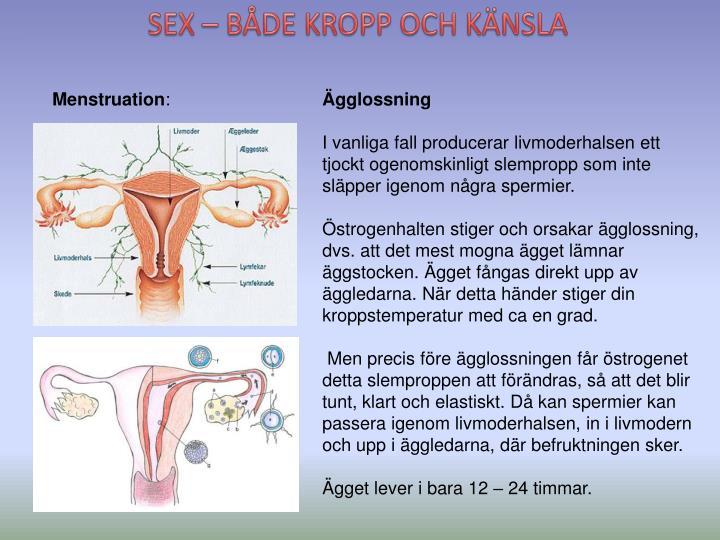 SEX – BÅDE KROPP OCH KÄNSLA