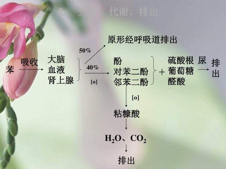 2. 分布、代谢、排出