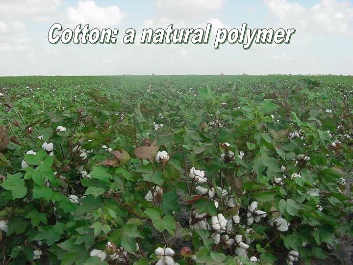 Cotton: a natural polymer
