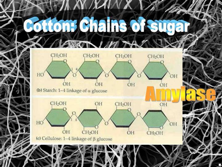 Cotton: Chains of sugar