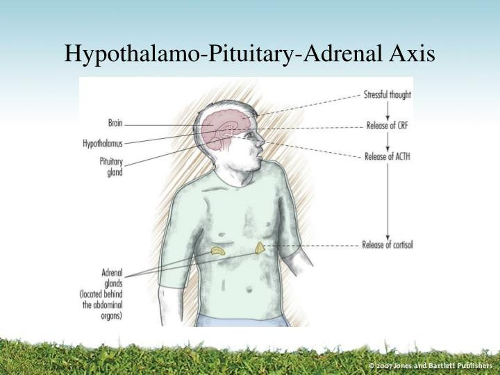 Hypothalamo-Pituitary-Adrenal Axis