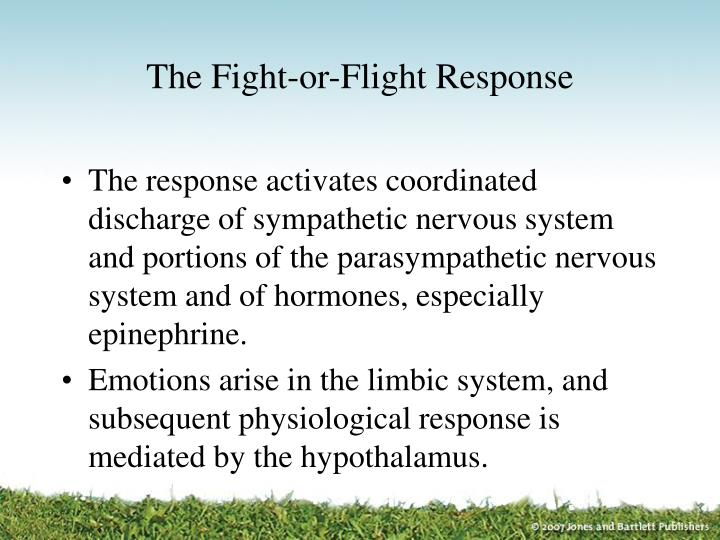 The Fight-or-Flight Response