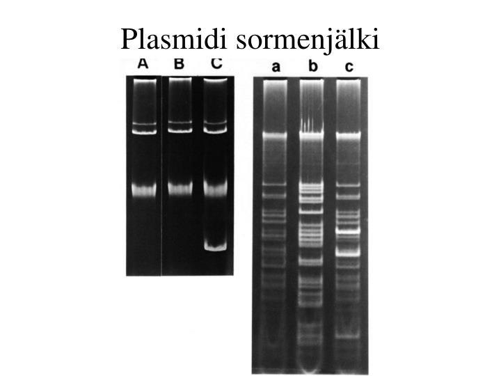 Plasmidi sormenjälki