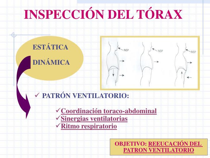 INSPECCIÓN DEL TÓRAX