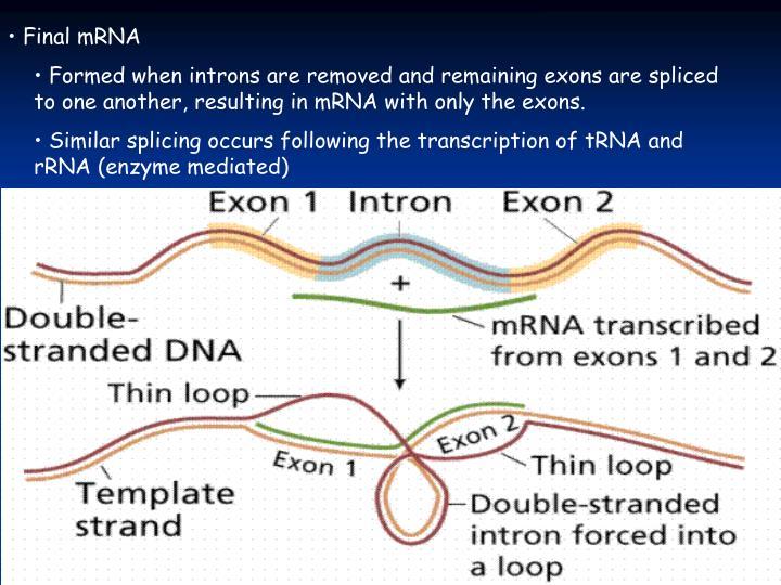 Final mRNA