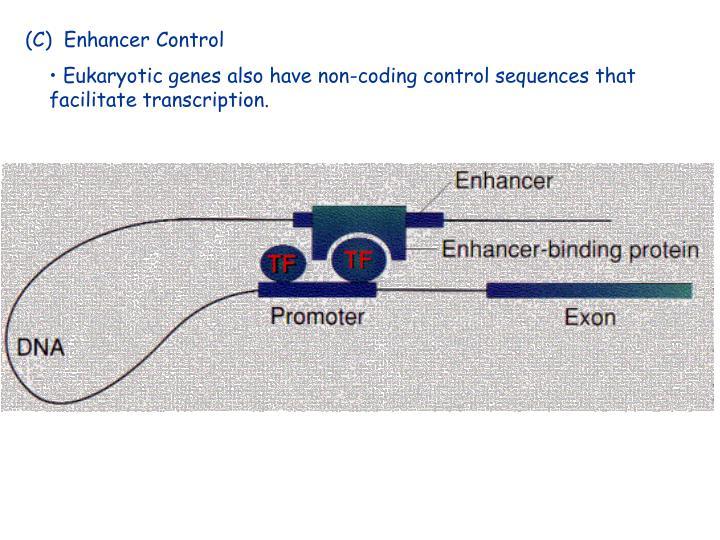 (C)  Enhancer Control