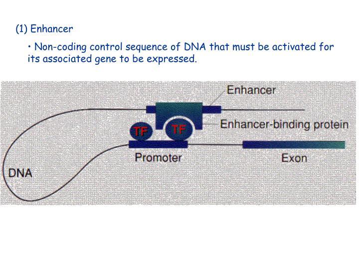 (1) Enhancer