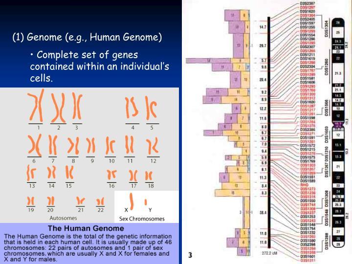(1) Genome (e.g., Human Genome)