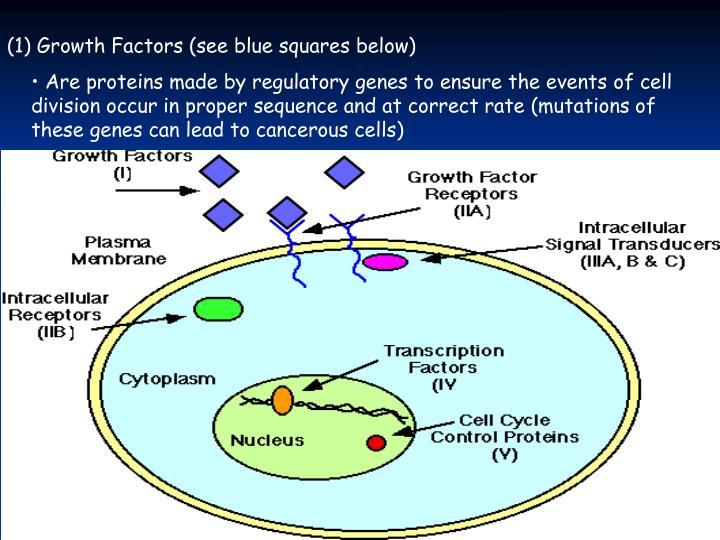 (1) Growth Factors (see blue squares below)