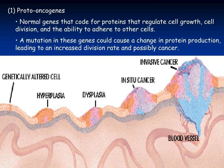 (1) Proto-oncogenes