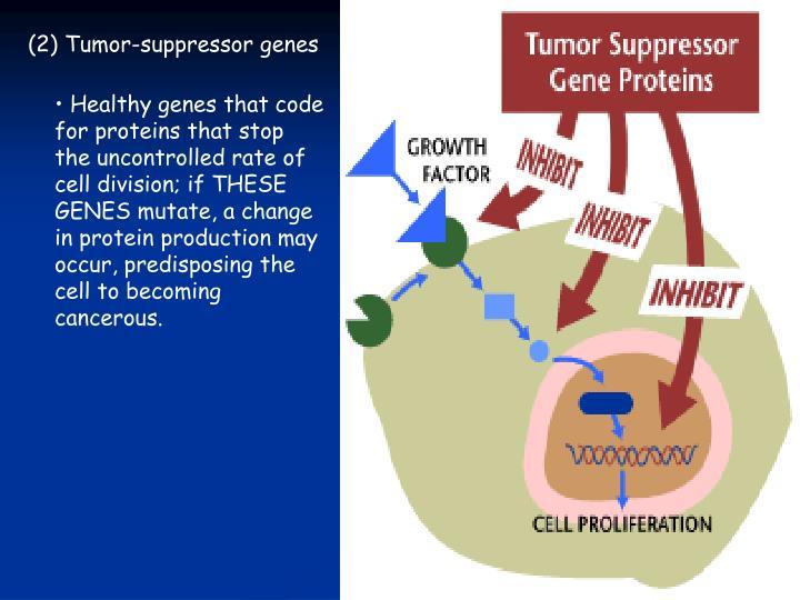 (2) Tumor-suppressor genes