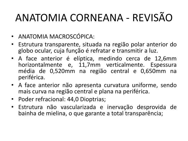 ANATOMIA CORNEANA - REVISÃO