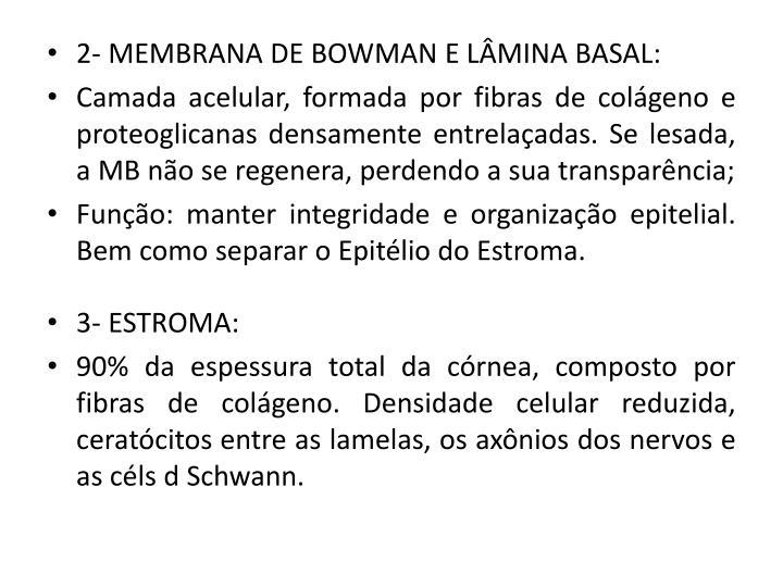 2- MEMBRANA DE BOWMAN E LÂMINA BASAL: