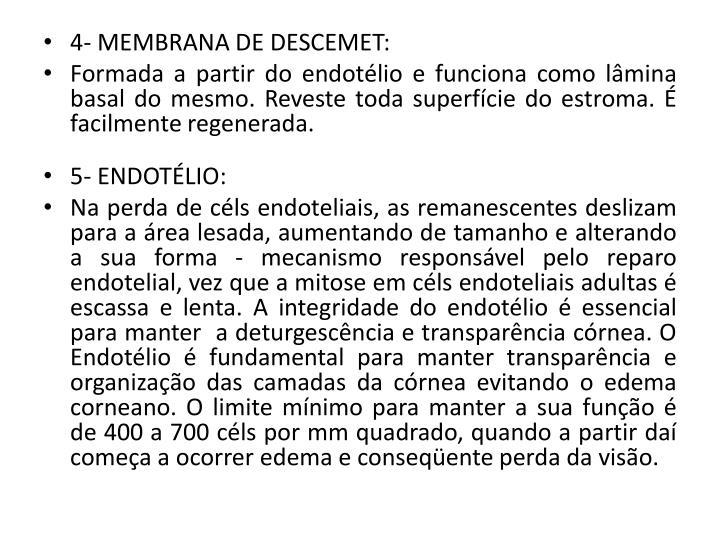 4- MEMBRANA DE DESCEMET: