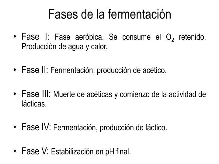Fases de la fermentación
