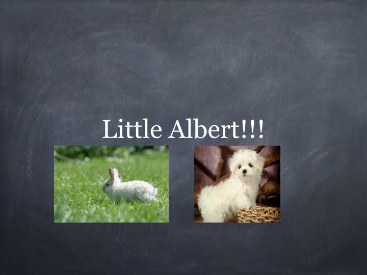 Little Albert!!!