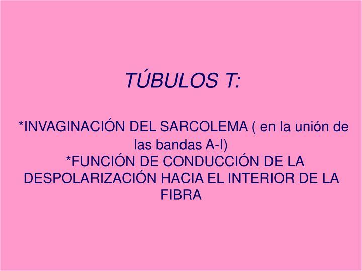 TÚBULOS T: