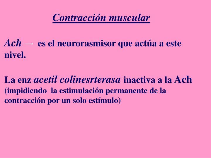 Contracción muscular