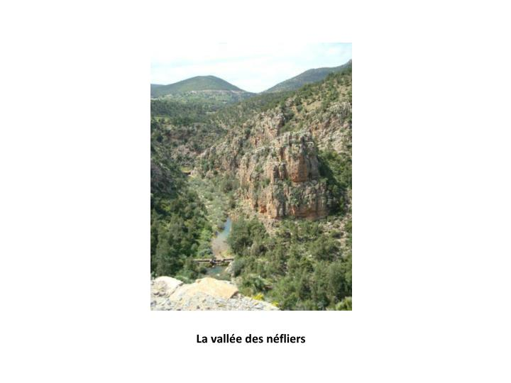 La vallée des néfliers