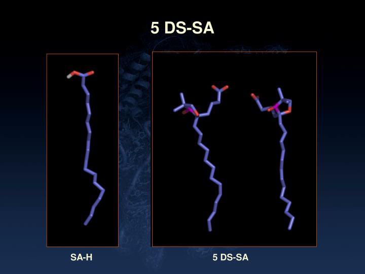 5 DS-SA