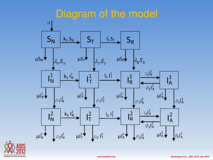 D iagram of the model