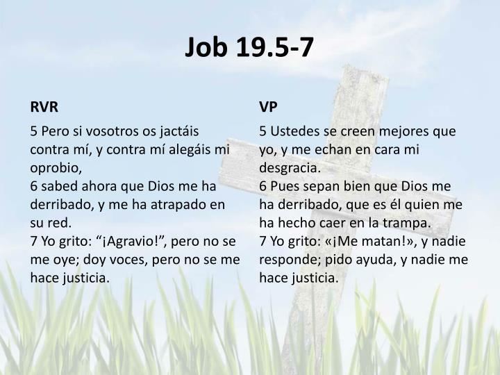 Job 19.5-7