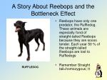 a story about reebops and the bottleneck effect