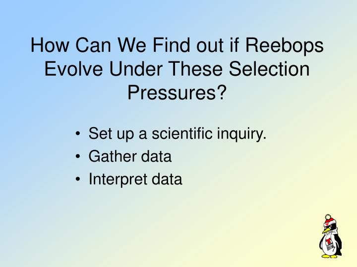 How Can We Find out if Reebops Evolve Under These Selection Pressures?