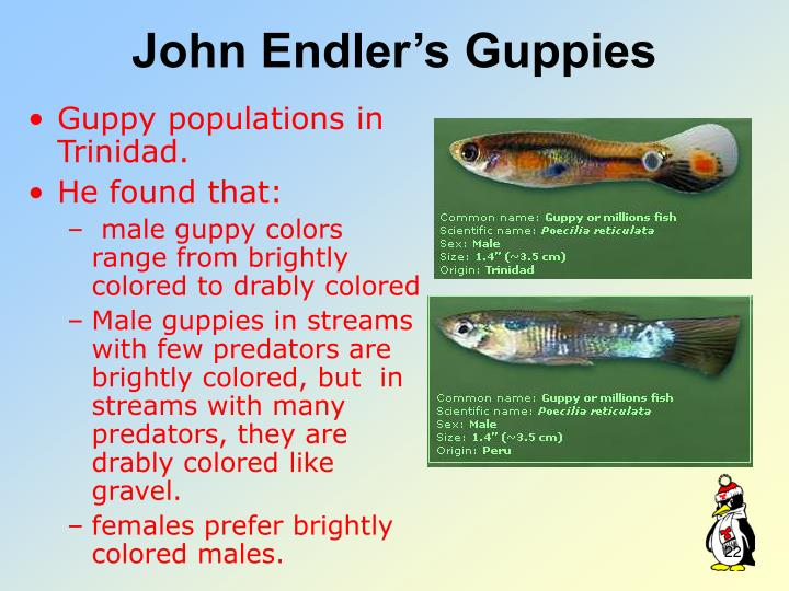 John Endler's Guppies
