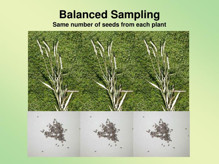 Balanced Sampling