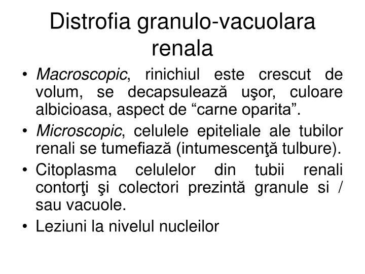 Distrofia granulo-vacuolara renala
