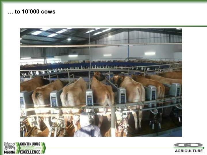 … to 10'000 cows