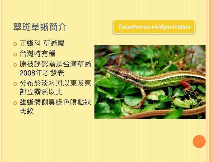 翠斑草蜥簡介
