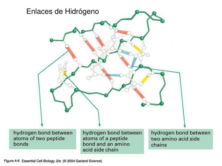 Enlaces de Hidrógeno