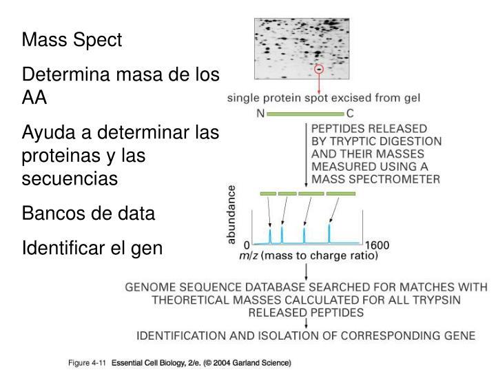 Mass Spect