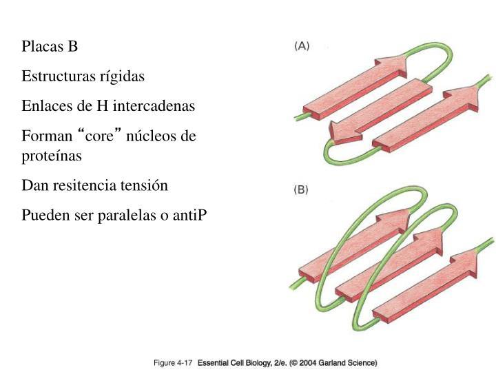 Placas B