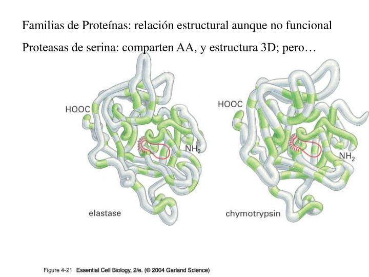 Familias de Proteínas: relación estructural aunque no funcional