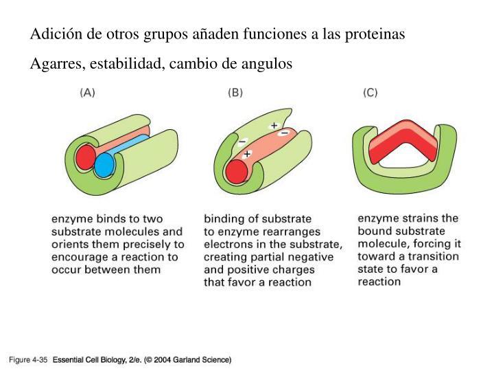 Adición de otros grupos añaden funciones a las proteinas