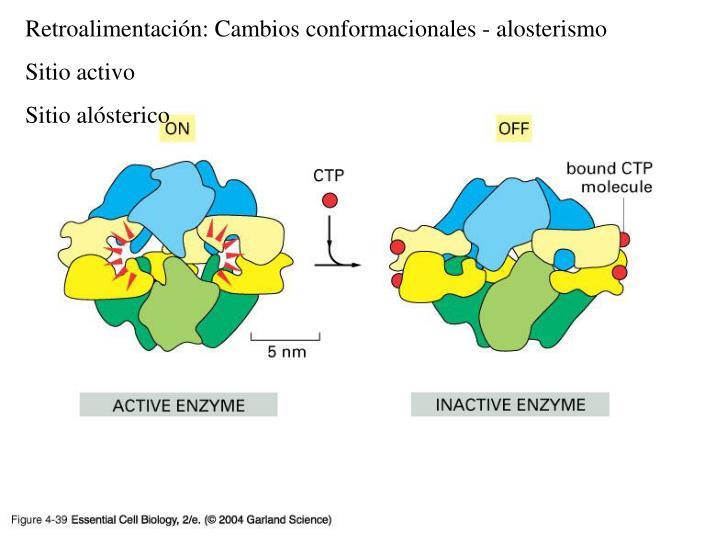 Retroalimentación: Cambios conformacionales - alosterismo