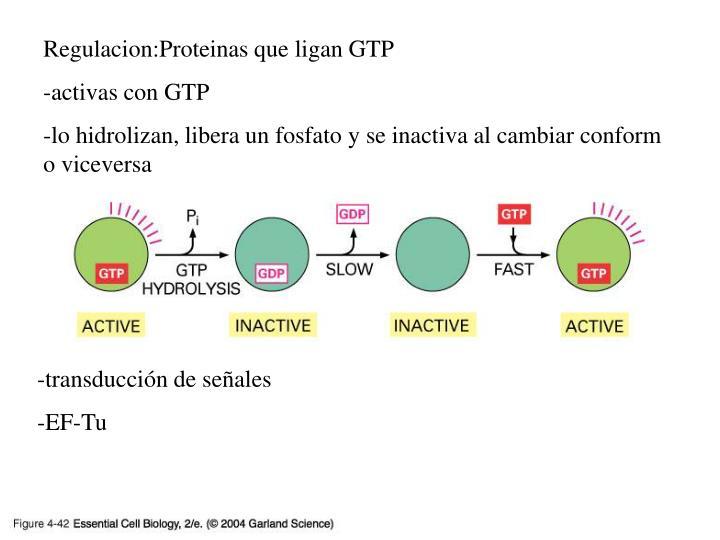 Regulacion:Proteinas que ligan GTP