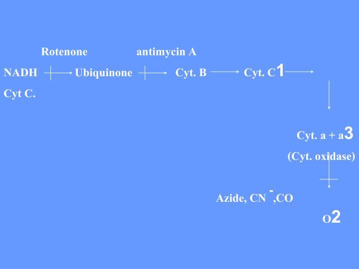 Rotenone                 antimycin A